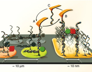 Single Molecule Cut & Paste - Biophysics and Molecular ...