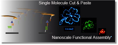 single molecule c&p
